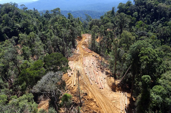 An aerial photograph of selected logging in one part of Sabah, which experts say, does more damage to the environment.