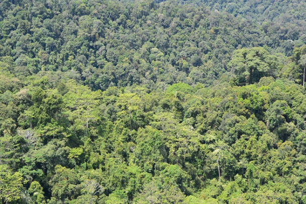 Sabah holds about 1.65 million hectares of intact forest, about the size of the U.S. state of Hawaii, but the majority lie outside protected areas, according to research published in 2013. - Photo credit / © WWF-Malaysia/STCP