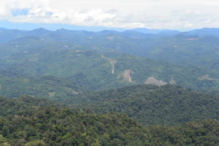Conservation groups had been crafting an alternate future for FMU5, one that would save its forests from intensive logging. Photo credit / © WWF-Malaysia/STCP