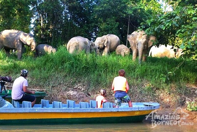 The Sukau river cruise is popular with local and foreign tourists. Cnservationists fear once the bridge goes up, the rare animals will soon disappear. - Photo credit Amazing Tours